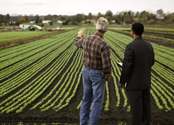 دراسات جدوة للمشروعات الزراعية.6